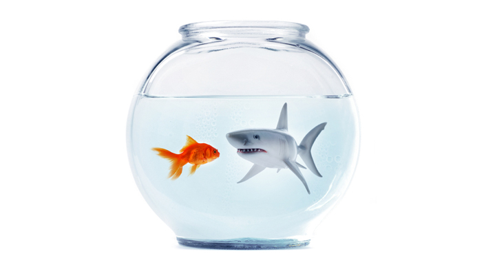 shark - How to Navigate Internal Politics and Its Impact on the Organization